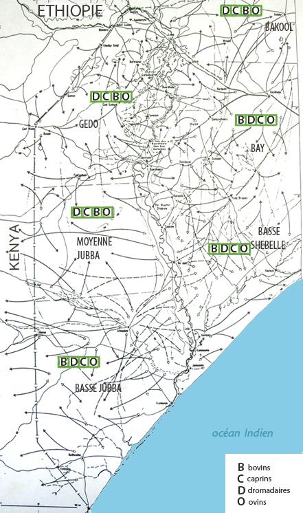 Les migrations de bétail dans la vallée de la Grande Jubba. Il coexiste plusieurs types de migrations. Un trajet avec une flèche blanche et une flèche noire aux extrémités indique un aller-retour saisonnier. Un trait discontinu indique une migration intermédiaire entre saison des pluies et saison sèche. Un trait continu avec une flèche blanche à l'extrémité indique une migration de dromadaire supplémentaire entre les deux saisons. Un trait continu avec une flèche noire à l'extrémité indique un trajet différent de la saison des pluies.